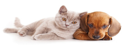 Ozonowanie - zabijanie zapachu sierści kota i psa